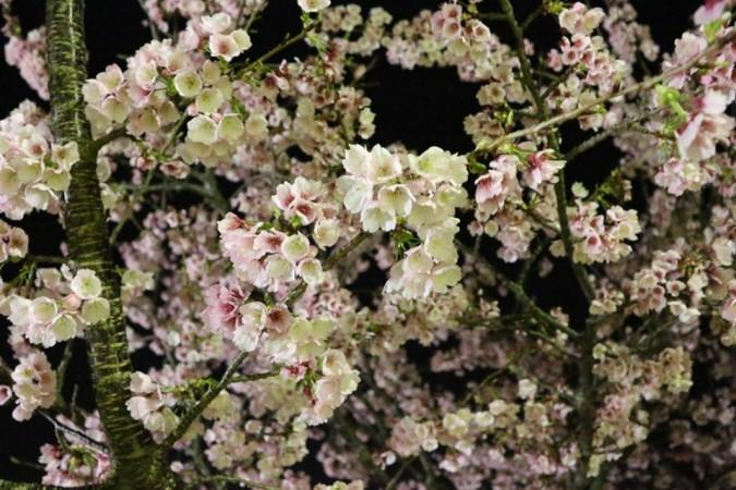 熱海のお隣、伊東市【伊豆高原】の桜です。