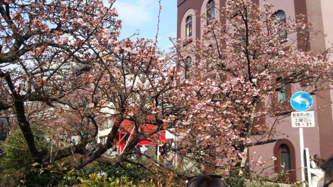 『第8回 あたみ桜 糸川桜まつり』が開幕しました。