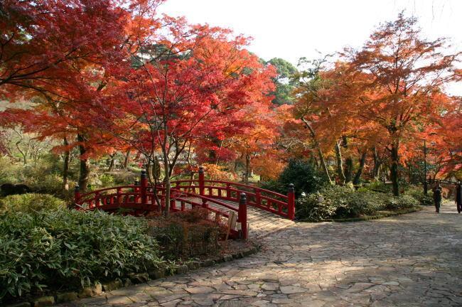 熱海梅園 紅葉3