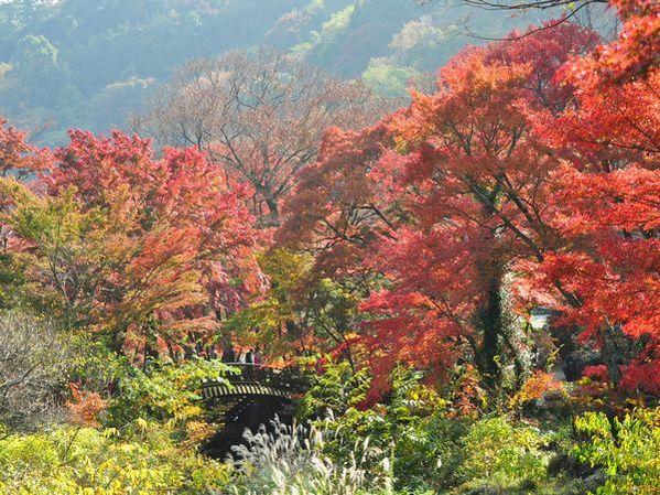 11月17日から熱海梅園の紅葉イベントがはじまります!