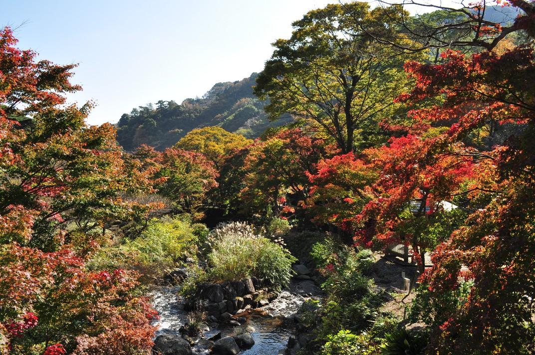 熱海の紅葉も始まってます♪