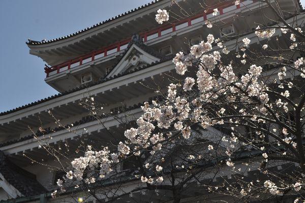 桜の名所!熱海城へ行ってきました