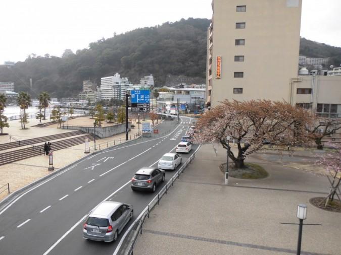渚小公園の『大島桜』もまもなく満開です。~2月25日撮影~