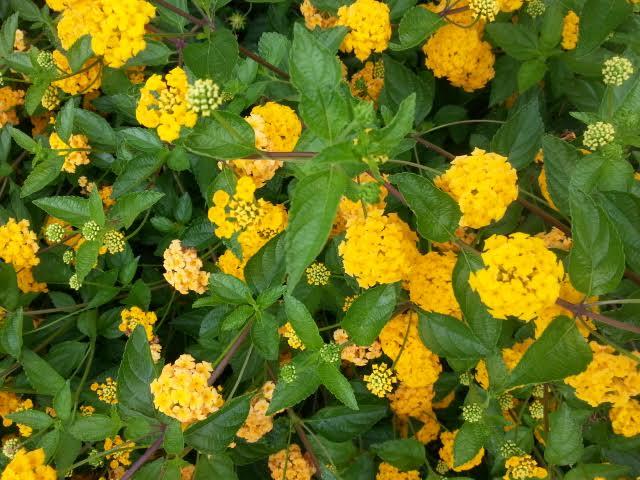 咲き誇る花は他にもありました。~ジャカランダ遊歩道~