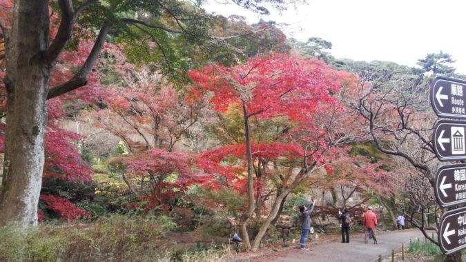 紅葉の熱海梅園『もみじまつり』の会場です。11月29日