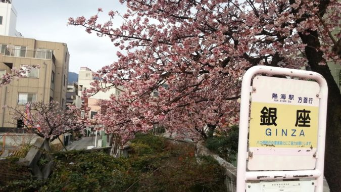 1月21日(土)『あたみ桜まつり』が開幕です。