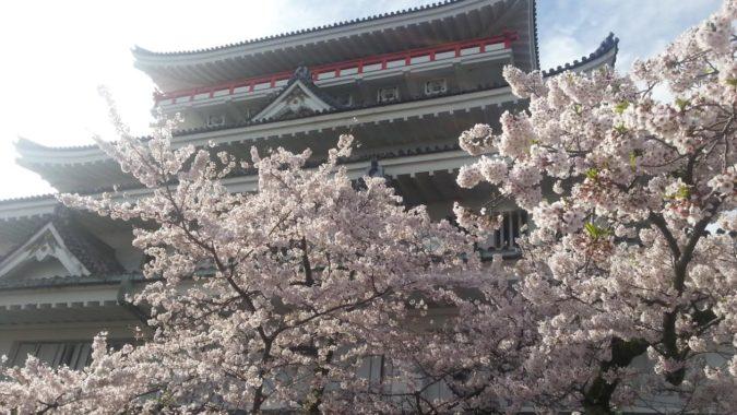 熱海城の桜が満開です。