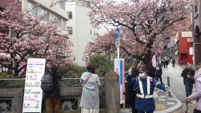 1月28日(日)の「あたみ桜」~糸川遊歩道沿い~