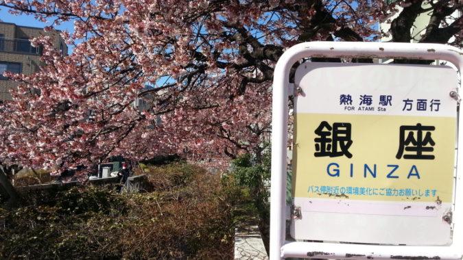まだまだ『あたみ桜』が咲いているので、ライトアップの延長になりました。