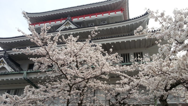 『熱海城桜まつり』最新開花状況。3月27日