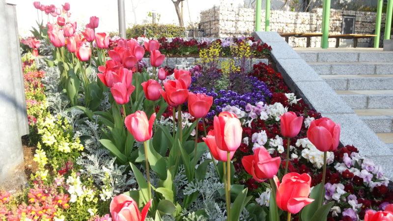 花満開の『花広場』~熱海市役所前~