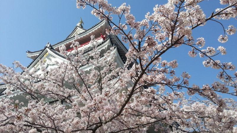 桜満開の熱海城・・・・・