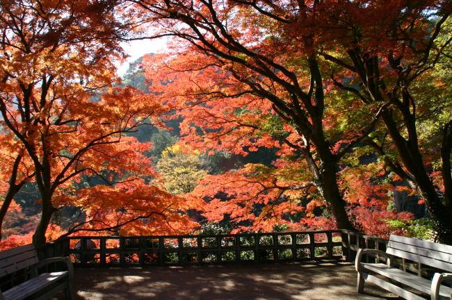 日本でいちばん最後の紅葉。『熱海梅園 もみじまつり』