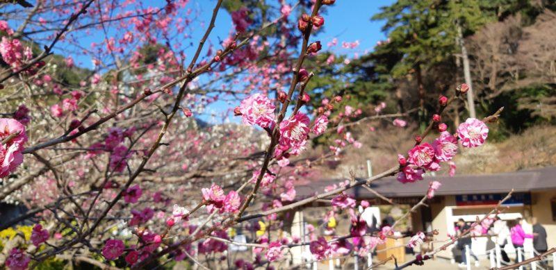 AM9:20『熱海梅園 梅祭り会場入り口』