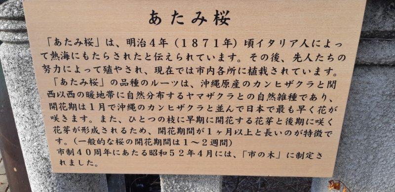 後、一週間位は、さくらが楽しめそうです。~糸川遊歩道のあた桜まつり~