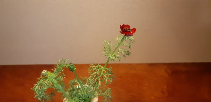 今日の花・・・・和風館1階