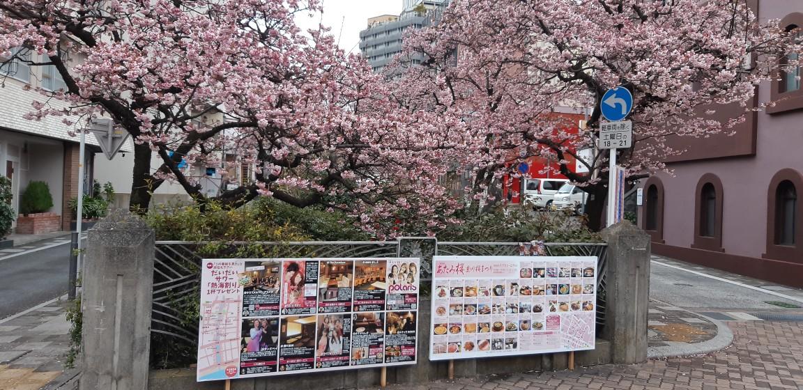 1月27日 AM8:00糸川遊歩道の『さくら祭り』の会場の様子